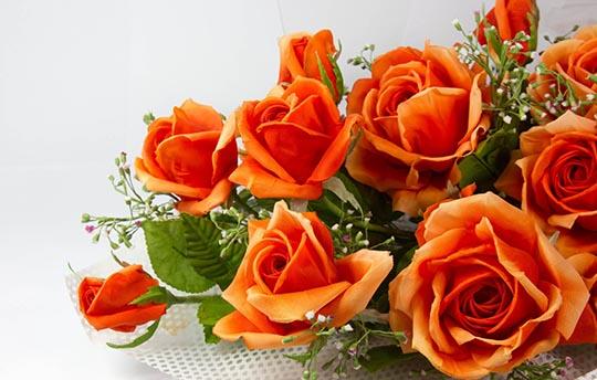 roses-orange