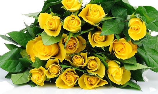 roses-yellow