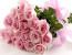 Как выбрать цвет розы